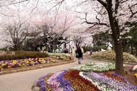 江戸時代に徳川吉宗が整備した桜の公園で、流し撮りに挑戦(北区・飛鳥山公園) - 旅プラスの日記