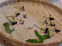 「すみれ、スミレ & ワイルドストロベリー」のストロベリーポット レッスン - 心とカラダが元気になるアロマ&ハーブ・ガーデン教室chant rose