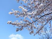 晴れたので午後の散歩 - TACOSの野鳥日記