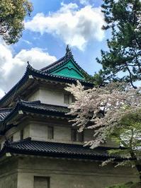 皇居の桜! - 写真家 永嶋勝美の「散歩の途中で . . . !」(DGSM Print)