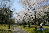 広島の桜 - 柳に雪折れなし!Ⅱ