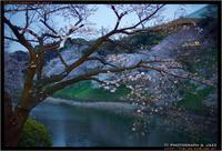 九段下の桜 with Speedmaster 50mm F0.95 - TI Photograph & Jazz