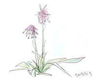 朝からビリー・ホリデイを聴く - マリカの野草画帖