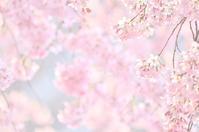 桜の木に - GreenLife
