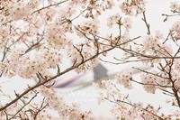 春霞 - WiNGSCAPE