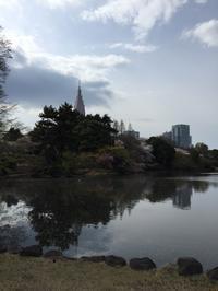 東京の桜は満開! - ヨーロッパ映画を観よう!