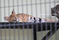のんびりゆったりの動物たち@わんぱーくこうち - 今日ものんびり動物園