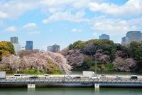 桜の名所 - ★☆みなさんぽんちくわ2☆★