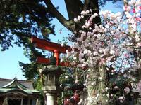 天沼八幡神社 - 子ども空手×杉並 六石門 らいらいブログ