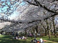 善福寺川緑地 - 子ども空手×杉並 六石門 らいらいブログ