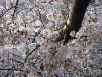 善福寺川 - 子ども空手×杉並 六石門 らいらいブログ