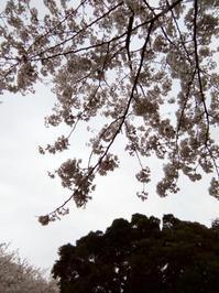桜咲いた - ここどんな町