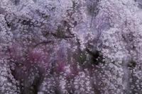 咲き満つ - duke days