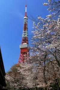 東京タワーと桜 - Granpa ToshiのEOS的写真生活