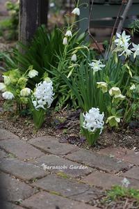花たちの競演 - バラと遊ぶ庭