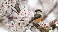 母退院! - Life with Birds 3