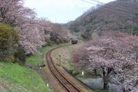 桜だより(2) わ鉄 真坂のS字カーブ (撮影日:2017/4/7) - toshiさんの気まぐれフォトブログ