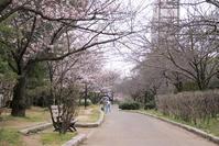 お花見散歩 - おはよう おはる!