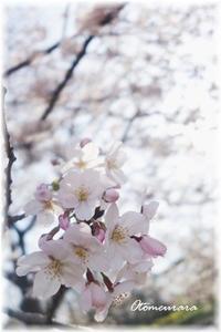 入門して何年目?(^_^;)  & English Lesson 4.7 - 日々楽しく ♪mon bonheur