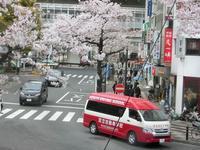 藤田八束の桜前線@東京は異常、地方間格差をどう無くすか・・・その方策とは、東京の桜 - 藤田八束の日記