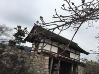 花便り-2  松代城跡の桜は今、、、Cherry Blossom News -2  Not Blossoming Yet at Matsushiro, Nagano - my gallery-2