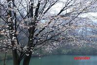 春雨開花 - ジージーライダーの自然彩彩