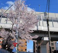 今年の桜、満喫しました! - のんびり街さんぽ