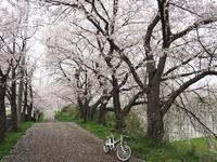 曇天の中、自転車花見 - デジカメ一眼レフ開眼への道