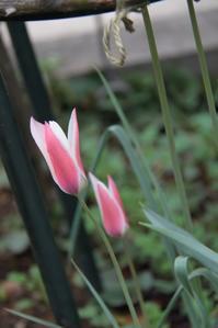 庭の様子 -2014年4月7日 - まとまりの無い庭 excite版