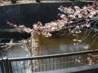 お花見 - 京都で不動産・中古マンションを探すなら「京都マンション・戸建ナビ」