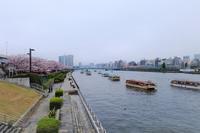 隅田川でお花見デート - ナオの*毎日が宝石箱*