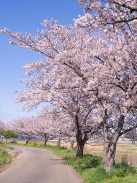 埼玉 綾瀬川沿い - 岩月澄子-時の欠片を拾い集めて・・・