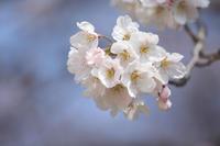 花かんざし  - 風の彩り-2