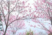 熊野若王子神社@弾丸日帰り京都ツアー2017春 - カメラをもってふらふらと