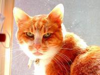 ネコと遊ぶのデジブックを公開しました。 - 写真撮り隊の今日の一枚2