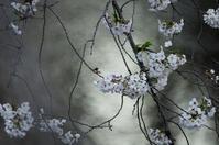 目黒川面白図鑑 Ⅶ 4 - 生きる。撮る。