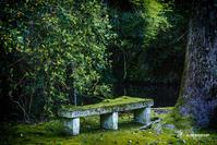 ☆ 苔むす (座れないベンチ)☆ - Trimming
