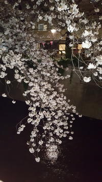 桜 - 美しい心・美しい日本語・ことばを心にのせて     スペースU