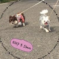 お散歩♪ - ハピらぶ日記+α
