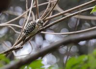 山田池公園にて、在庫から - ぼくの写真集2・・・Memory of Moment