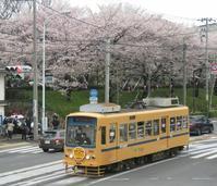2017、櫻、咲く。-久:飛鳥山花鉄リベンジ - デハ712のデジカメ日記2017