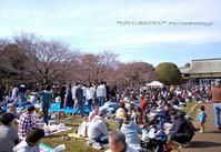 春の宴*2017 - *** life is beautiful ***