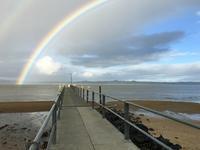昨日の虹と狂い咲きのスミレ/ Rainbow and Seemingly Confused Violet - アメリカからニュージーランドへ