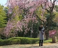 さくらのある風景 - イーハトーブ・ガーデン