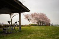 雨&夜桜ジテツウ - ゆるゆる自転車日記♪