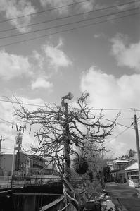 エレガントに舞う投光樹 - Film&Gasoline