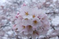 桜色 - 私景空間
