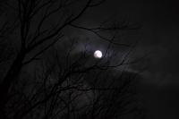 夜の散歩(3cut) moon -     ~風に乗って~    Present