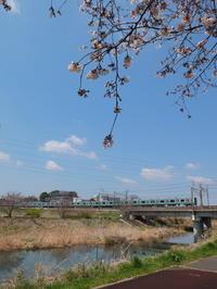 桜と常磐線 - 亢竜悔いあり