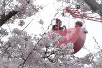 桜 Pink Pink - Berry's Bird